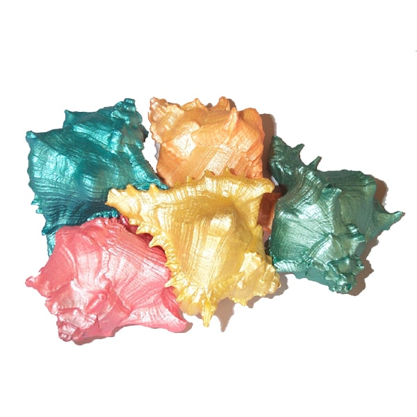 Dyed Hermit Crab shells Wholesale by Sals Marine