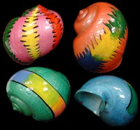 Painted Shells for Hermit Crabs by Sals Marine
