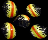 Decorative Hermit Crab Shells Wholesale Supplies